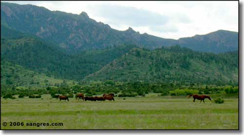 horses on the range