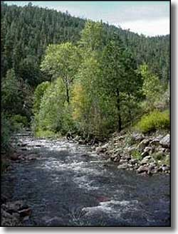 The Pecos River in Santa Fe National Forest