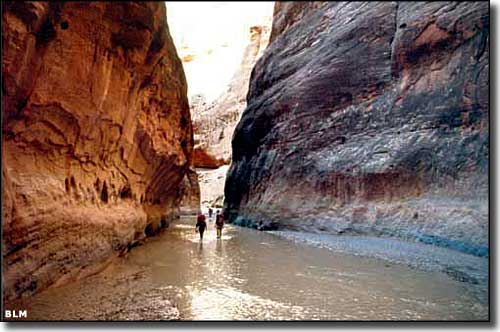 At the bottom of Paria Canyon