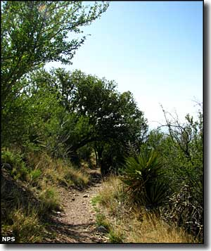 Joe's Canyon Trail, Coronado National Memorial