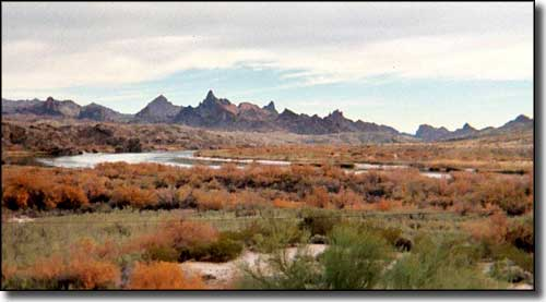 Topock Marsh, near Havasu Wilderness