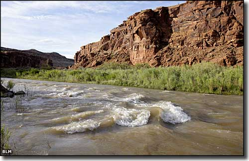 Along the Gunnison River in Dominguez-Escalante National Conservation Area