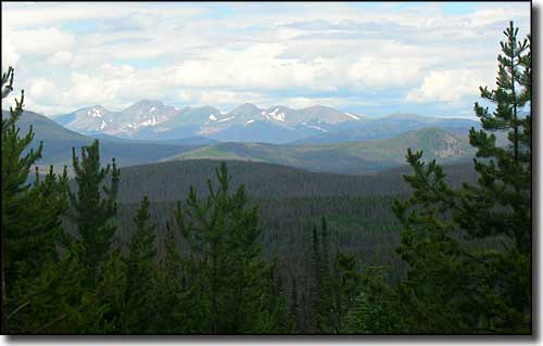 A typical view in Routt National Forest