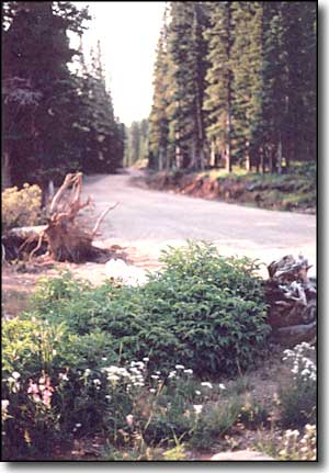 Forest Service road