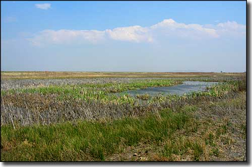 Wetlands at Alamosa National Wildlife Refuge
