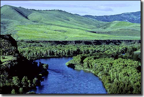 South Fork of the Snake River near Swan Valley