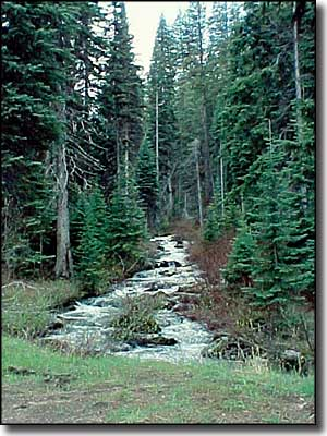 A stream along the Payette River Scenic Byway