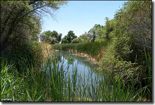 Corn Springs at Desert National Wildlife Refuge