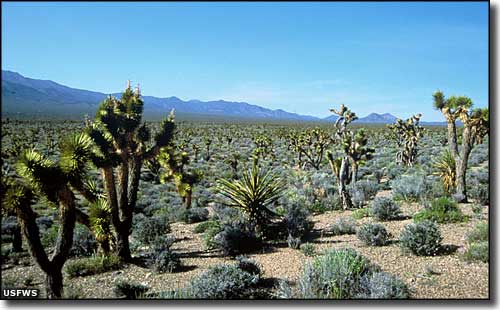 A typical scene at Desert National Wildlife Refuge