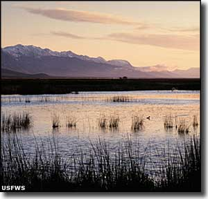 Ruby Lake National Wildlife Refuge at dawn