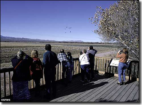 Birdwatchers at Bosque del Apache National Wildlife Refuge