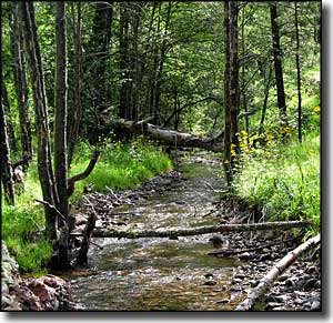 A stream in the Aldo Leopold Wilderness